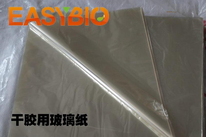 干胶用玻璃纸 凝胶干胶 蛋白胶干胶
